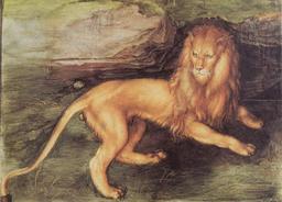 Lion de Dürer. Source : http://data.abuledu.org/URI/5251b6dc-lion-de-durer