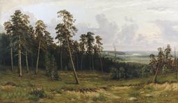 Lisière de forêt de pins. Source : http://data.abuledu.org/URI/5139155b-lisiere-de-foret-de-pins