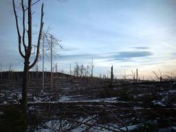 Ouragan Lothar en 1999. Source : http://data.abuledu.org/URI/52c84f86-lotharpfad