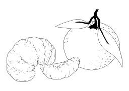 Mandarine. Source : http://data.abuledu.org/URI/5026c295-mandarine
