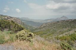 Maquis corse. Source : http://data.abuledu.org/URI/51dfcbb4-maquis-corse