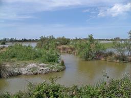 Marais près de Vaccarès. Source : http://data.abuledu.org/URI/56d5dcbf-marais-pres-de-vaccares