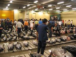 Marché au thon frais au Japon. Source : http://data.abuledu.org/URI/520151ed-marche-au-thon-frais-au-japon