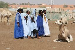 Marché aux dromadaires à Nouakchott. Source : http://data.abuledu.org/URI/54d256a4-marche-aux-dromadaires-a-nouakchott