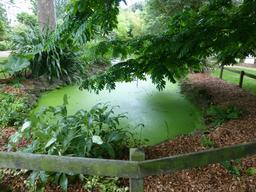 Mare au Jardin botanique de La Rochelle. Source : http://data.abuledu.org/URI/5821b734-mare-au-jardin-botanique-de-la-rochelle