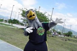 Mascotte sportive de faucon. Source : http://data.abuledu.org/URI/58854a48-mascotte-sportive-de-faucon