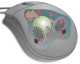 Mécanisme de la souris à boule. Source : http://data.abuledu.org/URI/5330b053-mecanisme-de-la-souris-a-boule