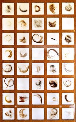 Mèches de cheveux. Source : http://data.abuledu.org/URI/5040e352-meches-de-cheveux