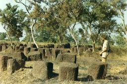 Mégalithes au Sénégal. Source : http://data.abuledu.org/URI/52d57430-megalithes-au-senegal