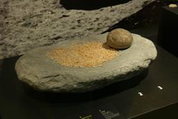 Meule et broyeur en pierre du néolithique. Source : http://data.abuledu.org/URI/534a592a-meule-et-broyeur-en-pierre-du-neolithique