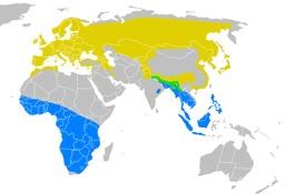 Migrations de l'hirondelle de fenêtre. Source : http://data.abuledu.org/URI/51882547-migrations-de-l-hirondelle-de-fenetre