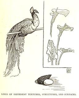 Modèle animal et végétal. Source : http://data.abuledu.org/URI/5653946b-modele-animal-et-vegetal
