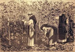 Moines cultivant la vigne. Source : http://data.abuledu.org/URI/56bbab46-moines-cultivant-la-vigne