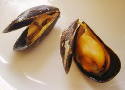 Moules. Source : http://data.abuledu.org/URI/509b93e1-moules