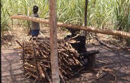 Moulin de canne à sucre au Liberia en 1968. Source : http://data.abuledu.org/URI/58c887ab-moulin-de-canne-a-sucre-au-liberia-en-1968