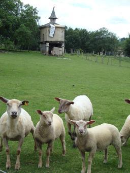 Moutons dans un pré. Source : http://data.abuledu.org/URI/536b9bad-moutons-dans-un-pre