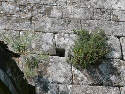 Mur et végétation. Source : http://data.abuledu.org/URI/582eb1c5-mur-et-vegetation