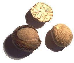 Muscade. Source : http://data.abuledu.org/URI/50af8cde-muscade