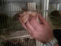Naissances à la ferme - 10. Source : http://data.abuledu.org/URI/55199a00-naissances-a-la-ferme-11