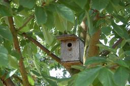 Nichoir dans un arbre. Source : http://data.abuledu.org/URI/5909103e-nichoir-dans-un-arbre