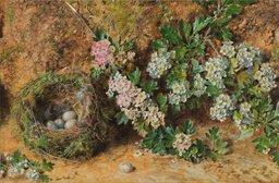 Nid de pinson en mai. Source : http://data.abuledu.org/URI/51fcf5d3-nid-de-pinson-en-mai