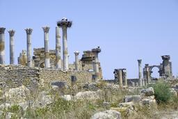 Nids de cigognes dans les ruines de Volubilis. Source : http://data.abuledu.org/URI/530343ad-nids-de-cigognes-dans-les-ruines-de-volubilis