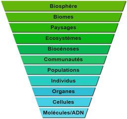 Niveau d'Organisation et d'Intégration du Vivant. Source : http://data.abuledu.org/URI/50b7f09c-niveau-d-organisation-et-d-integration-du-vivant