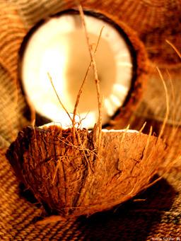 Noix de coco. Source : http://data.abuledu.org/URI/502a1388-noix-de-coco