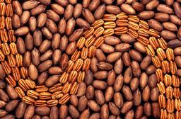 Noix de pécan. Source : http://data.abuledu.org/URI/5656dff6-noix-de-pecan