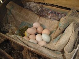 Oeufs dans un poulailler. Source : http://data.abuledu.org/URI/5329d023-oeufs-dans-un-poulailler