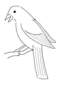 Oiseau. Source : http://data.abuledu.org/URI/5026e788-oiseau