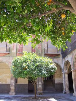 Orangers d'Andalousie. Source : http://data.abuledu.org/URI/51deee01-orangers-d-andalousie