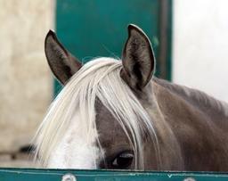 Oreilles d'un cheval. Source : http://data.abuledu.org/URI/52e11f70-oreilles-d-un-cheval