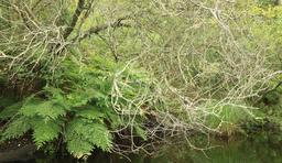 Osmondes royales à Biscarrosse. Source : http://data.abuledu.org/URI/55abdcfb-osmondes-royales-a-biscarrosse