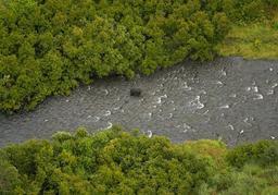 Ours pêchant dans une rivière. Source : http://data.abuledu.org/URI/5138e5dc-ours-pechant-dans-une-riviere