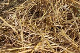 Paille en été. Source : http://data.abuledu.org/URI/59079704-paille-en-ete