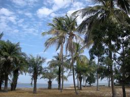Palmiers à Carabane. Source : http://data.abuledu.org/URI/5486ffbb-palmiers-a-carabane