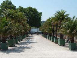 Palmiers de l'entrée de l'Orangerie de Versailles. Source : http://data.abuledu.org/URI/52b5a6ba-palmiers-de-l-entree-de-l-orangerie-de-versailles