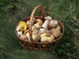 Panier de champignons comestibles. Source : http://data.abuledu.org/URI/55ccbd97-panier-de-champignons-comestibles
