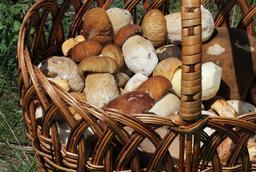 Panier de champignons en 2013. Source : http://data.abuledu.org/URI/588cad11-panier-de-champignons-en-2013