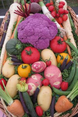 Panier de légumes. Source : http://data.abuledu.org/URI/518a1a45-panier-de-legumes