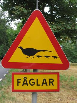 Panneau suédois de risque de faisans. Source : http://data.abuledu.org/URI/5137ac35-panneau-suedois-de-risque-de-faisans