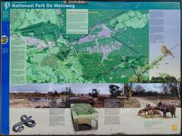 Parc national de Meinweg. Source : http://data.abuledu.org/URI/54d00fee-parc-national-de-meinweg
