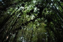 Parc National Des Volcans au Rwanda. Source : http://data.abuledu.org/URI/595bef7e-parc-national-des-volcans-au-rwanda