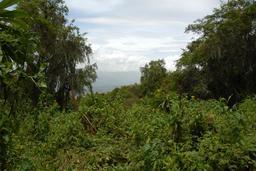Parc National Des Volcans au Rwanda. Source : http://data.abuledu.org/URI/595bf043-parc-national-des-volcans-au-rwanda