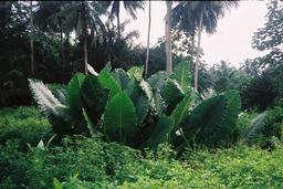 Parc Obo. Source : http://data.abuledu.org/URI/55310478-parc-obo-