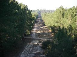 Pare-feu en forêt de Gascogne. Source : http://data.abuledu.org/URI/5131fcab-pare-feu-en-foret-de-gascogne