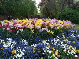 Parterre de fleurs à Stockholm. Source : http://data.abuledu.org/URI/56315493-parterre-de-fleurs-a-stockholm