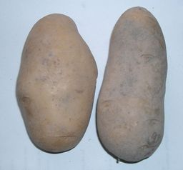 Patate. Source : http://data.abuledu.org/URI/501a2ded-patate