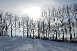 Paysage d'hiver. Source : http://data.abuledu.org/URI/5908efad-paysage-d-hiver